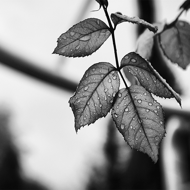 Fear Of Black And White Pictures Overcoming the Fear of Minimalism